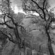 Cottonwood Trees-zion Art Print