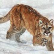 Cougar In The Snow Art Print