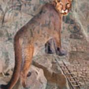 Cougar Rocks, Southwest Mountain Lion Art Print