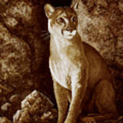Cougar Wait Until Dark  Art Print