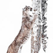 Cougars Tree Art Print