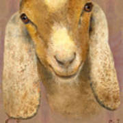 Country Charms Nubian Goat With Bright Eyes Art Print