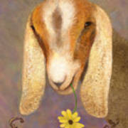 Country Charms Nubian Goat With Daisy Art Print