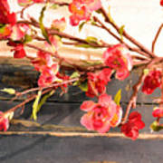 Country Quince Art Print
