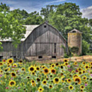 Country Sunflowers Art Print