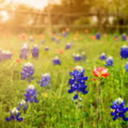 Country Wildflowers Art Print
