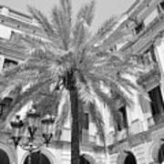 Courtyard Palm Art Print