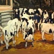 Cow Barn Art Print