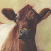 Cow Portrait IIi - Pregnant Pause Art Print