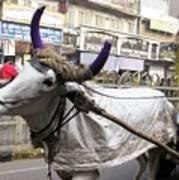 Cow Pulling Cart Art Print