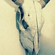 Cow Skull, Vintage Art Print