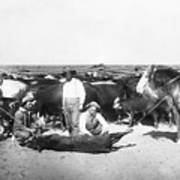 Cowboys Branding Cattle C. 1900 Art Print