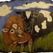 Cow's Art Print