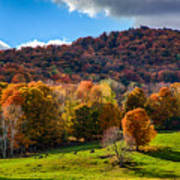 Cows In Pomfret Vermont Fall Foliage Art Print
