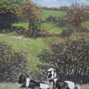 Cows Sitting By Hill Relaxing Art Print