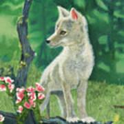 Coyote Pup Art Print by Terry Lewey