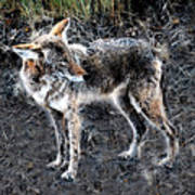 Coyote Waits Art Print