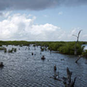 Ominous Clouds Over A Cozumel Mexico Swamp  Art Print