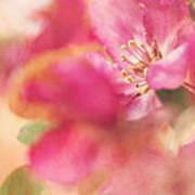 Crab Apple Blossoms II Art Print