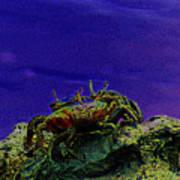 Crab Cakez 5 Art Print