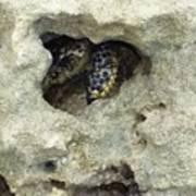 Crab Hiding In A Rock On The Seashore Art Print