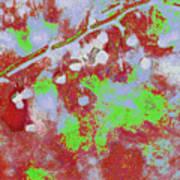 Crabapples Series #4 25 Art Print