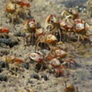 Crabs R Us Art Print