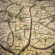 317805-cracked Mud Patterns  Art Print