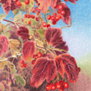Cranberry Bush In Autumn Art Print by Elizabeth Dobbs
