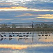 Cranes At Dawn 1 Art Print
