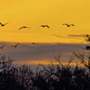 Cranes In The Sunrise Art Print
