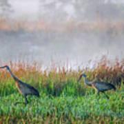 Cranes On Foggy Day Art Print