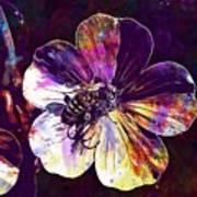 Cranesbill Flower Close Bee Insect  Art Print
