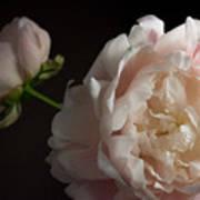 Cream And Pink Art Print