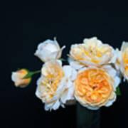 Creamy English Roses Art Print
