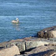 Creatures Of The Gulf - Pelican Landing Art Print