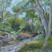 Creek At Linn Haven Art Print