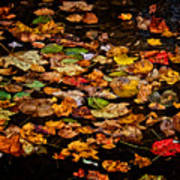 Creek Leaves Art Print
