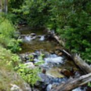 Creek On Mt. Spokane 1 Art Print