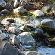 Creek Reflections 1 Art Print