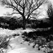 Creekside Winter Art Print