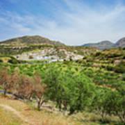 Crete Olive Grove Art Print