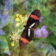 Crimson Longwing Butterfly 8231 Idp_2 Art Print