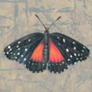 Crimson Patch Butterfly Art Print