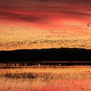 Crimson Sunset at Bosque Art Print
