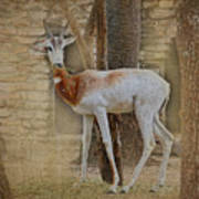 Critically Endangered Dama Gazelle Art Print