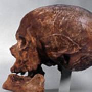Cro-magnon Skull Art Print