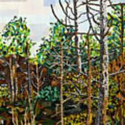 Croatan Forest 1 Art Print