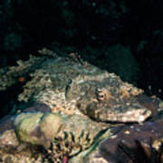 Crocodile Fish On Coral Art Print