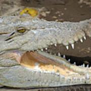 Crocodile Rock Art Print